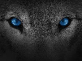 Technology Wolf